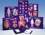Anatomy Activity Sets