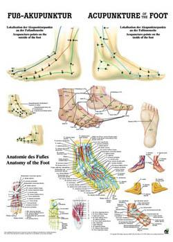 acupuncture foot chart: Foot acupuncture chart poster sports supports mobility