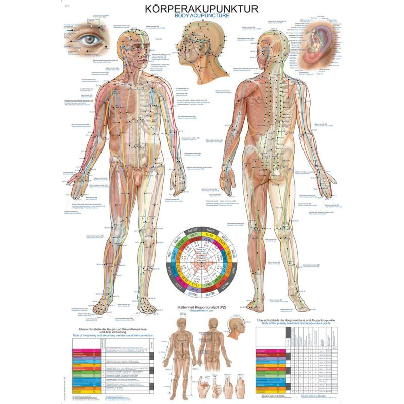 Body Acupuncture Educational Chart Sports Supports Mobility