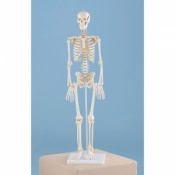 Miniature Model Skeleton Patrick