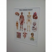 3D Human Body Poster