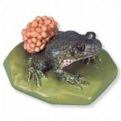 Midwife Toad Alytes Obstetricans