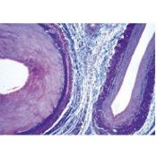 Normal Human Histology Large Set Part I. - Spanish