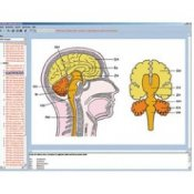 Nervous System And Transmission Of Information Part Ii Interactive CD-Rom