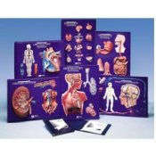 6 Model Activity Set Of The Body Systems
