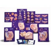 9 Model Activity Sets Of The Human Reproductive System