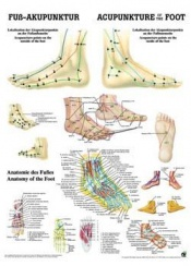 Foot Acupuncture Chart Poster