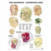 Head Acupuncture Chart Poster