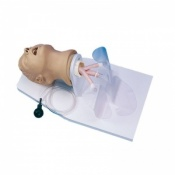 Adult Intubation Head