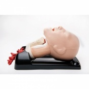 AirSim Advance Combo Bronchi Airway Management Trainer