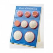 Cervical Dilatation Easel Display