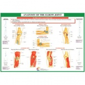 Chartex Elbow Anatomical Chart