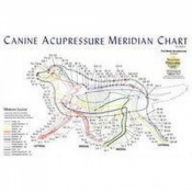 Canine Dog Acupressure Meridian Chart Poster