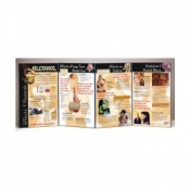 Effects and Hazards of Alcohol Folding Display Educational Aid