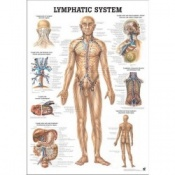 Human Lympatic System Poster