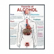 Hazards of Alcohol 3D Framed Chart Educational Aid