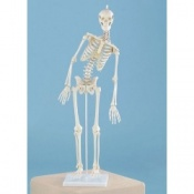 Miniature Therapy Skeleton ''Paul''