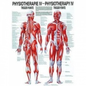 Physiotherapy Trigger Points Chart Poster