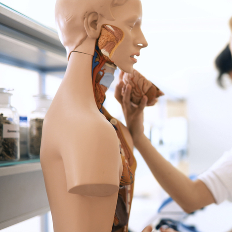 Best Medical Dolls For Teaching