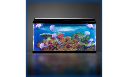 PlayLearn Jellyfish Tank Feature