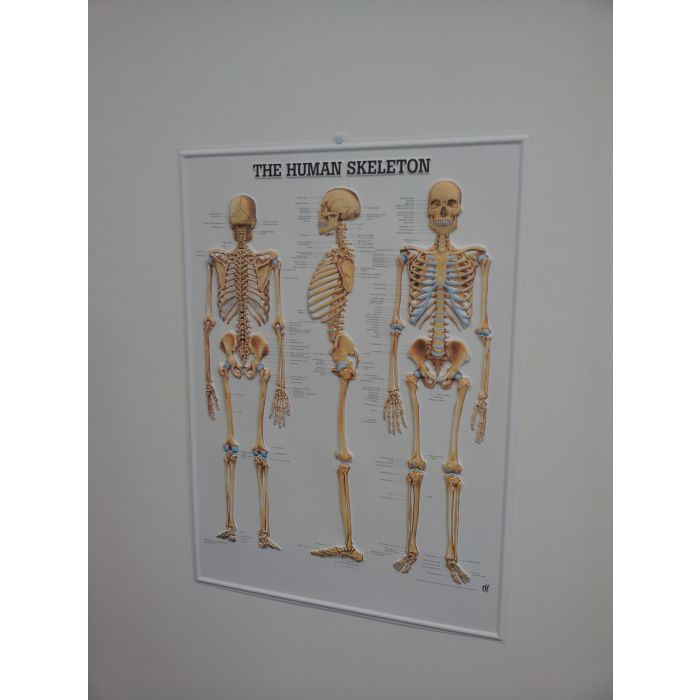 3d human skeleton poster sports supports mobility healthcare