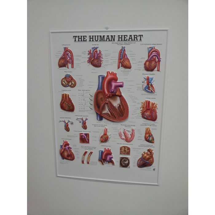 3d Human Heart Poster Sports Supports Mobility Healthcare