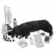 Advanced Sanitary CPR Dog