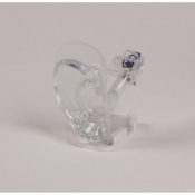 Transparent Life Size Ear Model