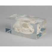 Cat Skull In Plastic Block
