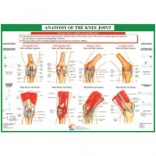 Chartex Knee Anatomical Chart