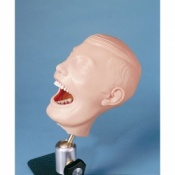 Dental Manikin