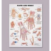 Anatomical Chart of the Hand and Wrist