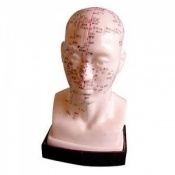 Soft Vinyl Head Acupuncture Model