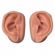 Pair of Realistic Ear Acupuncture Models